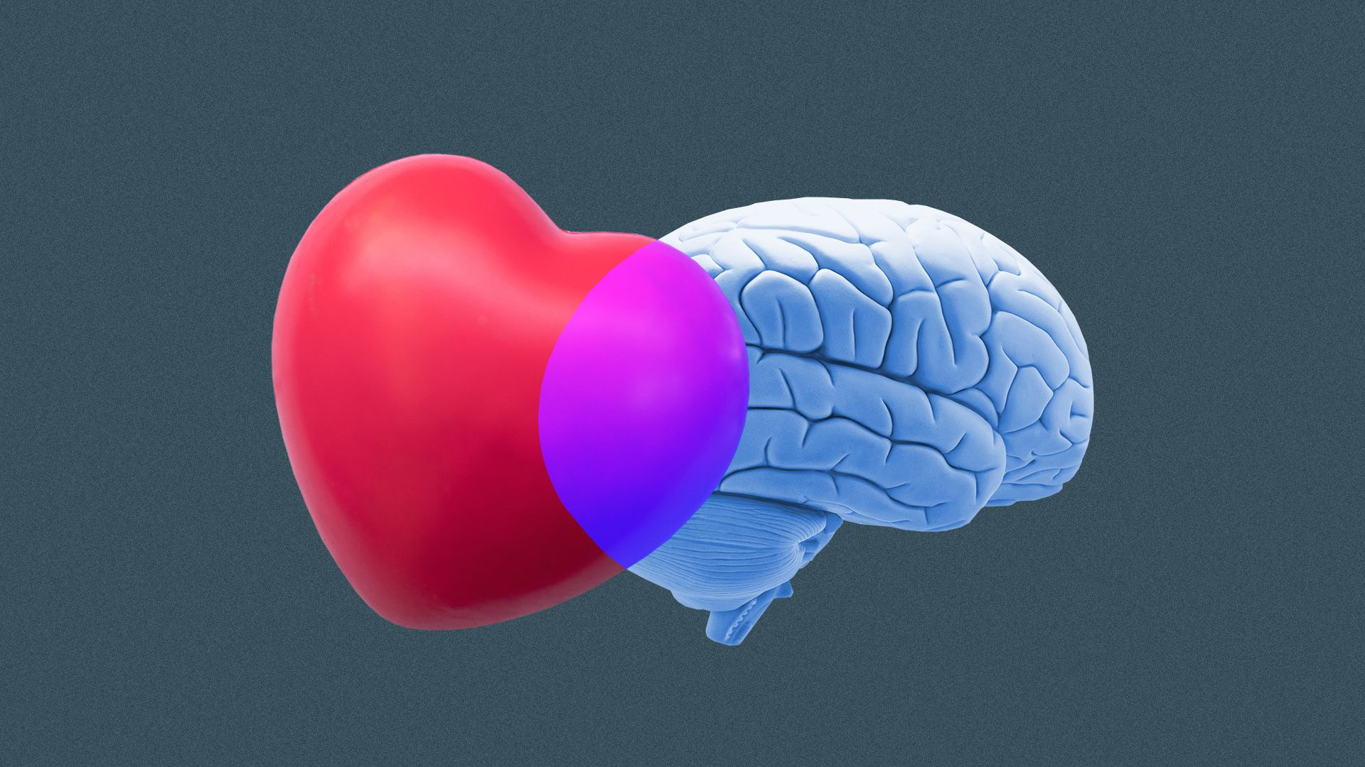 Illustration of a heart and brain overlapping to create a venn diagram