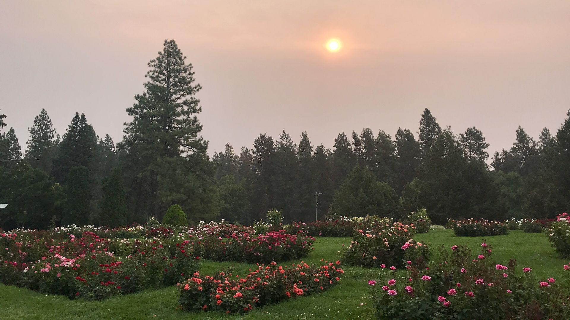 Sun rising amid smoke in local park in Spokane, WA