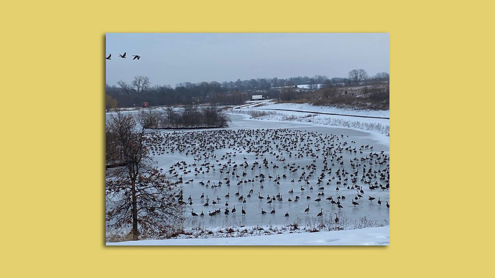 Geese last winter at Three Lakes Estes neighborhood on Des Moines' south side.