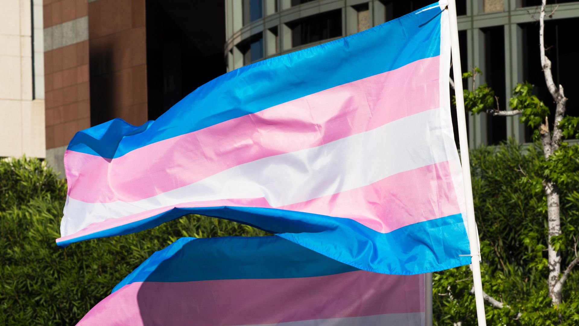Two trans flags wave in this picture.