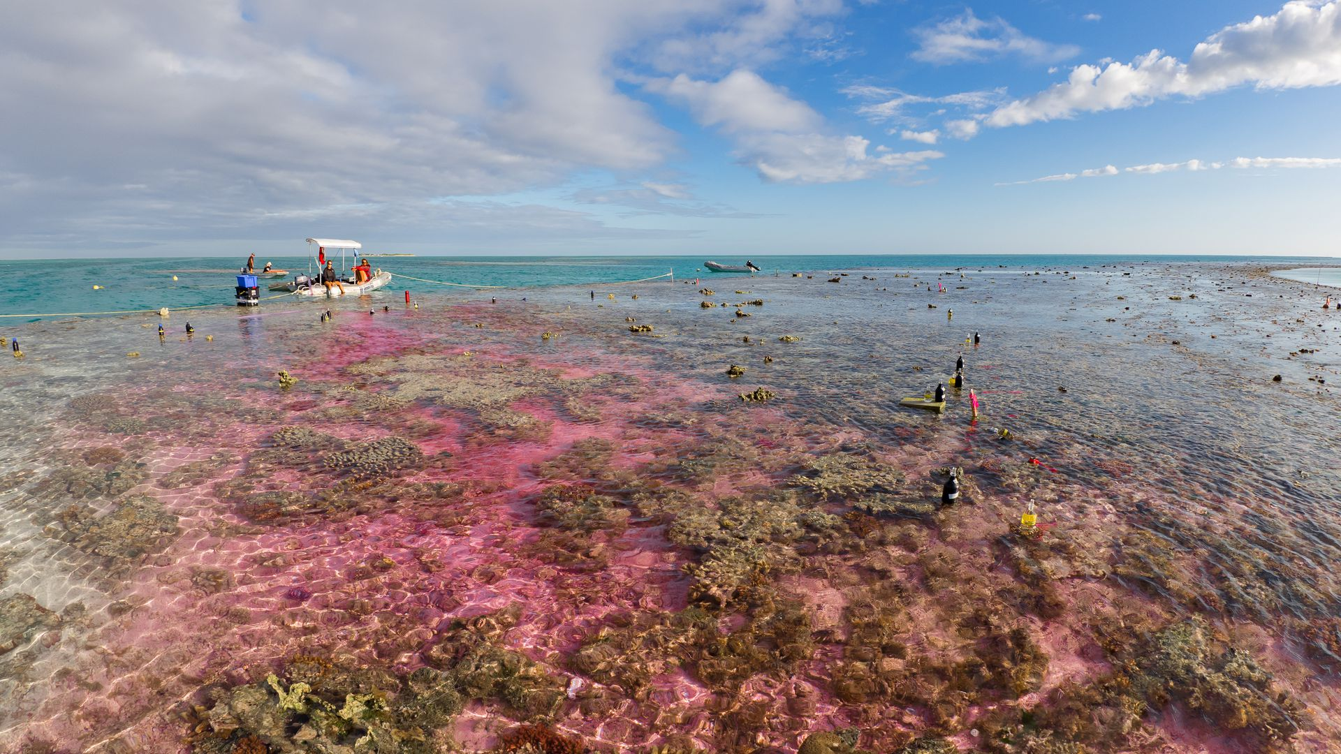 Experimental plume of carbon dioxide-enriched seawater and a dye tracer flowing across a coral reef flat in Australia's Great Barrier Reef.