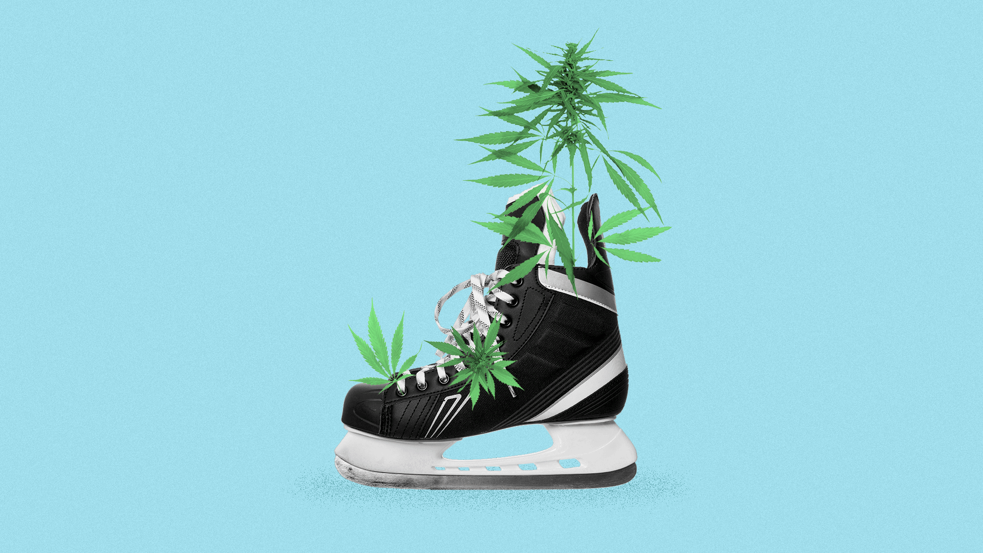 Illustration of a hockey skate with marijuana growing out of it.
