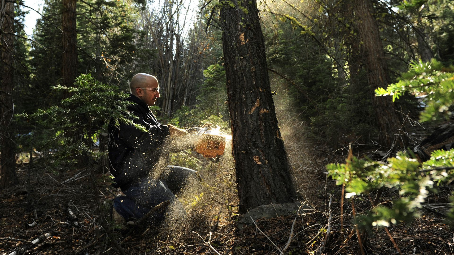 Neel Kashkari treats a tree on his property as though it were the current 2.5% Fed Funds target rate. Photo: Linda Davidson/The Washington Post via Getty Images