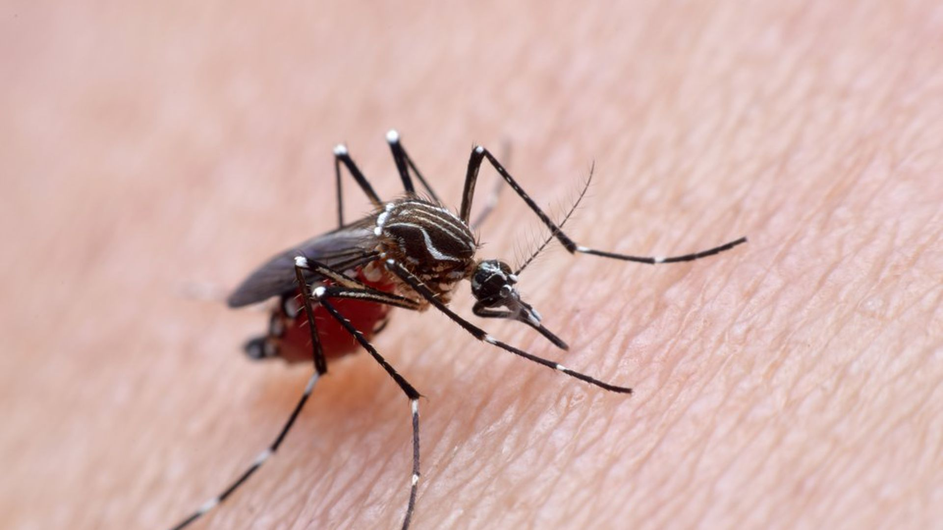 How dengue makes the immune system the enemy