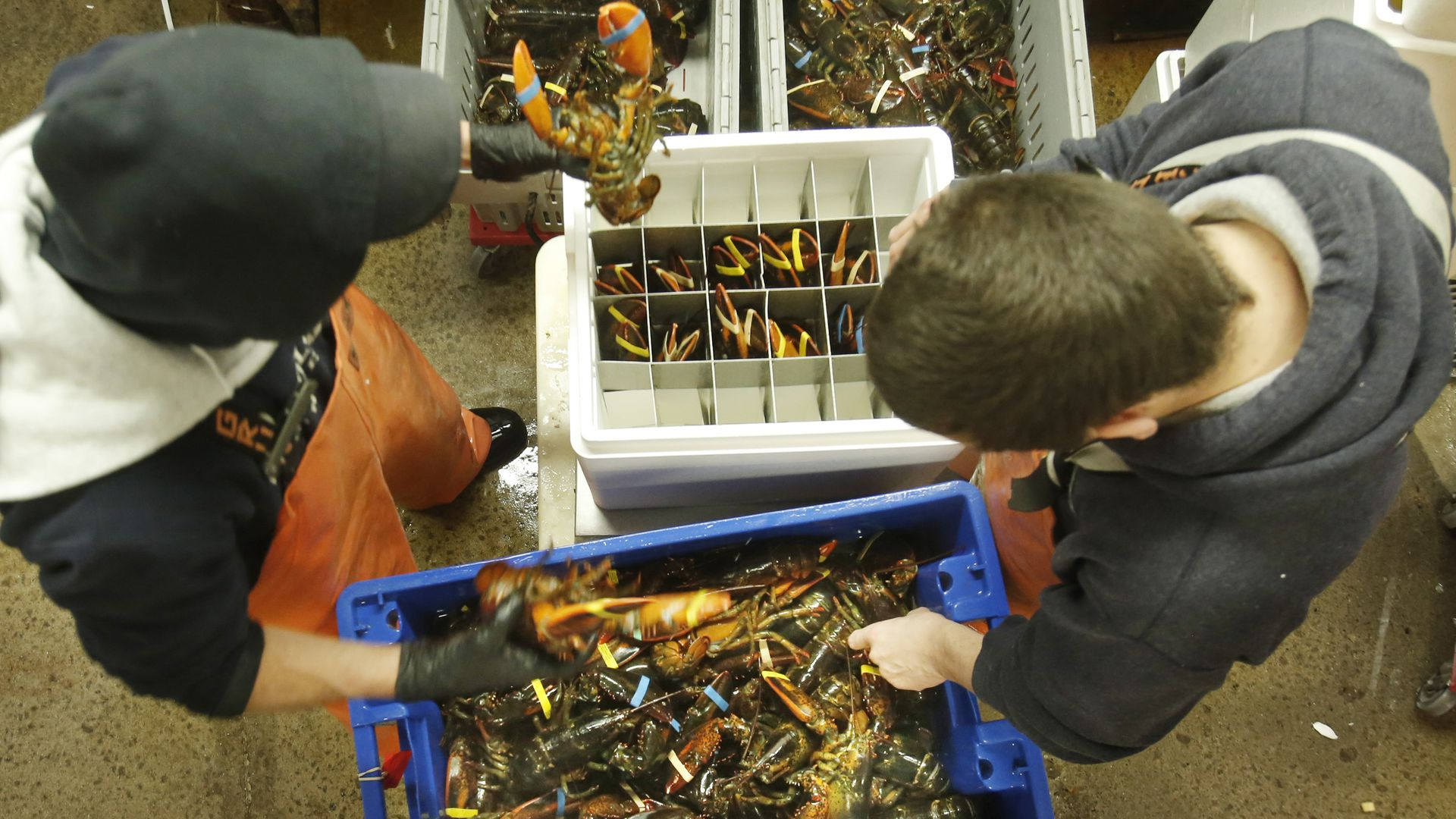 Aerial view of crates of lobster
