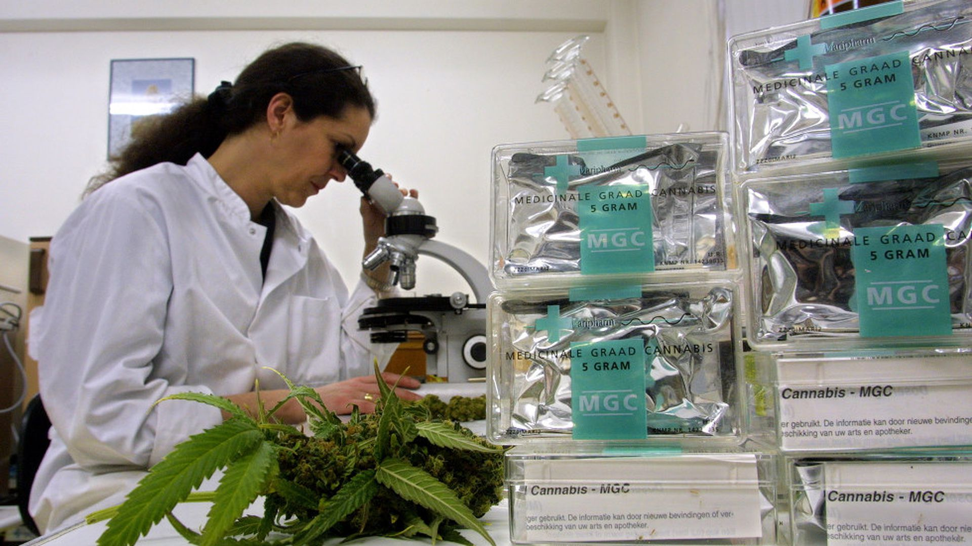 How Colorado scientists study weed