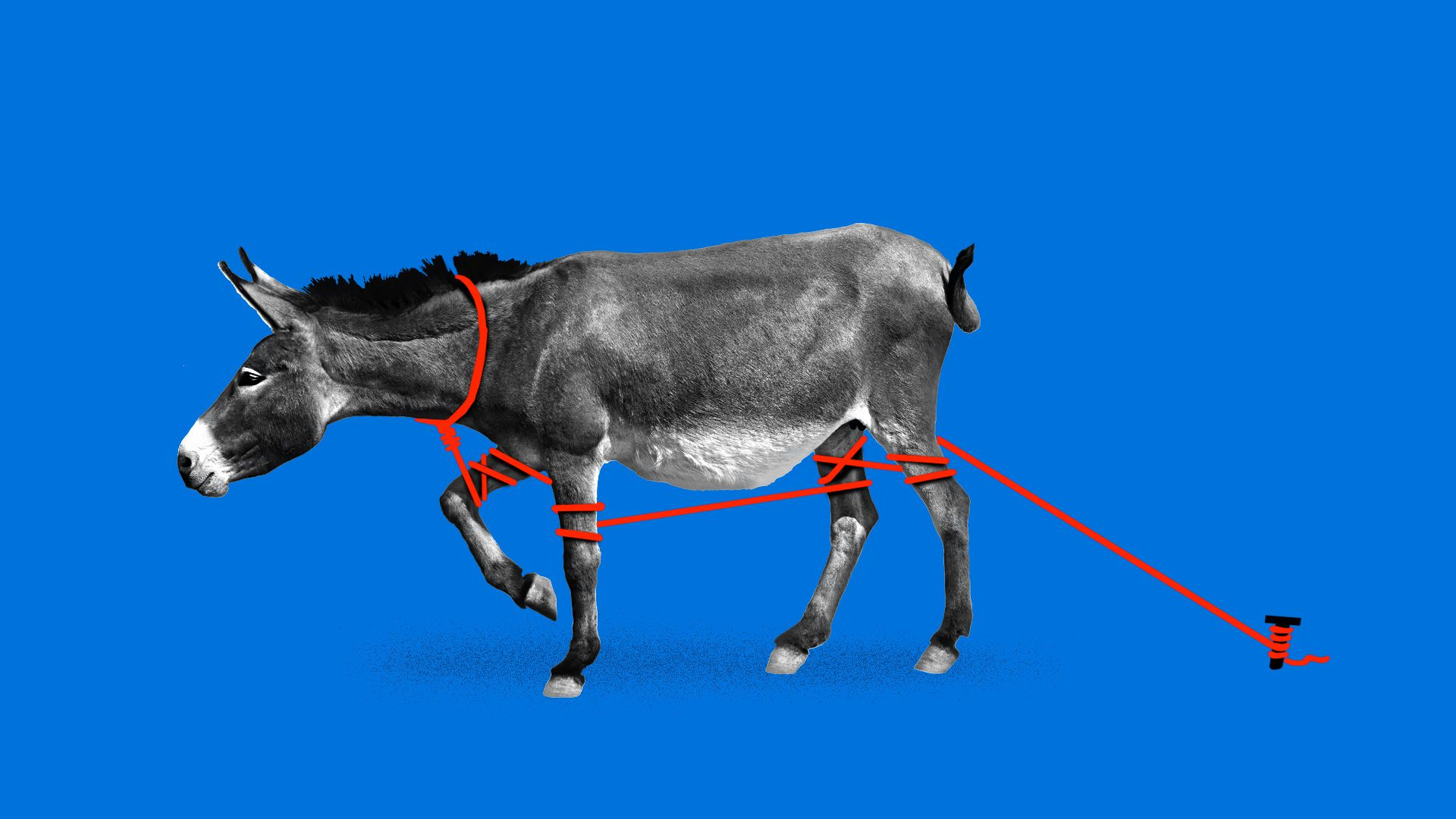 A donkey tied to a stake in the ground