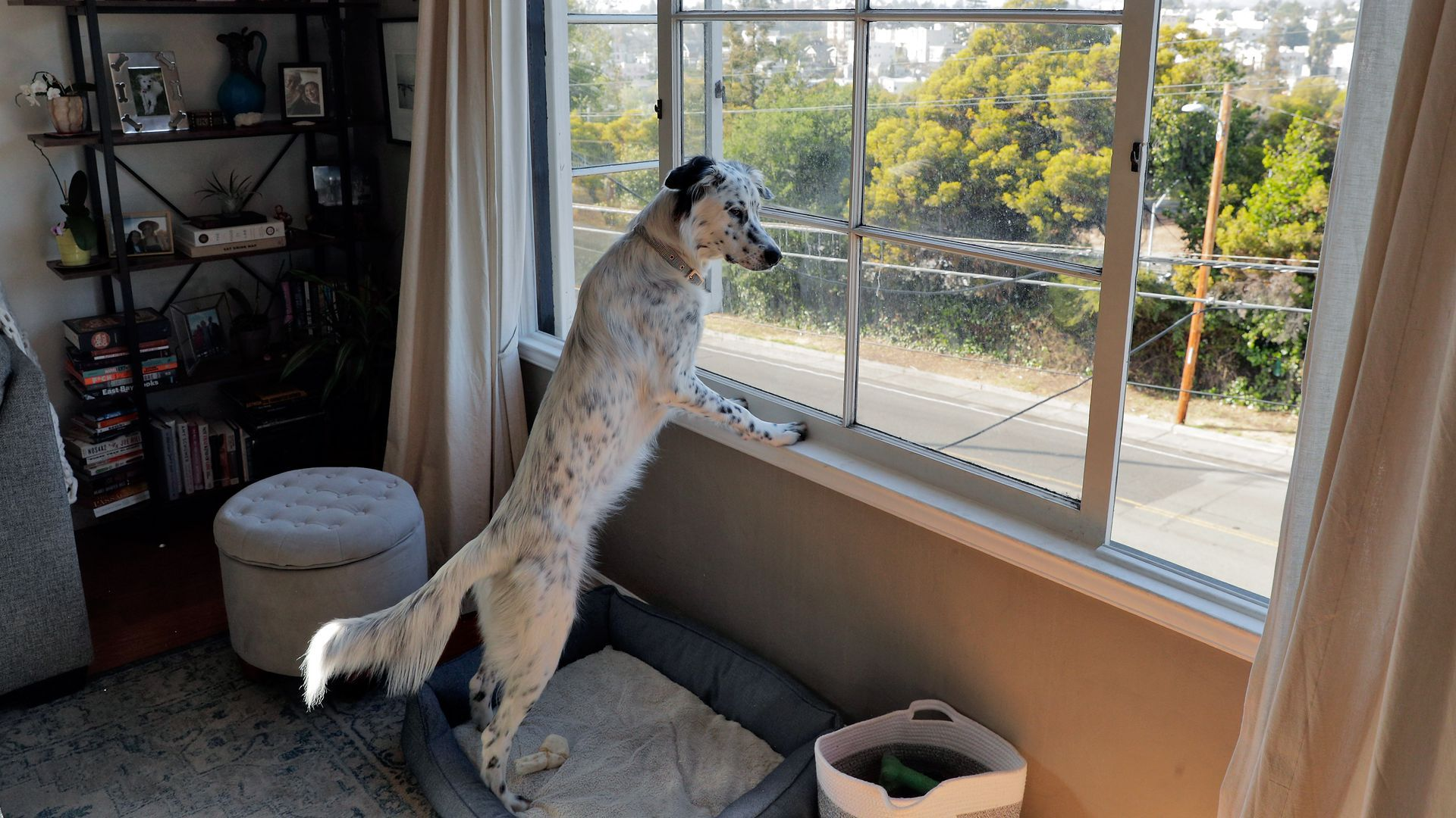 A dog stands on its hind legs looking out the window