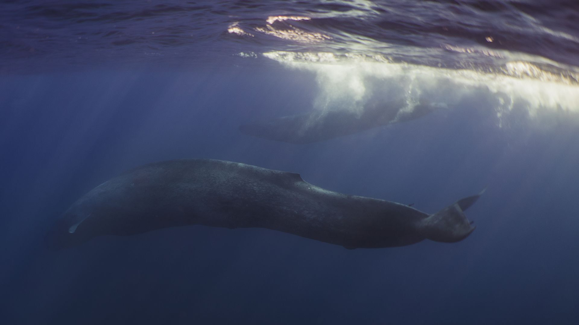 Climate Change Could Make It Harder For Blue Whales To Find Food Axios