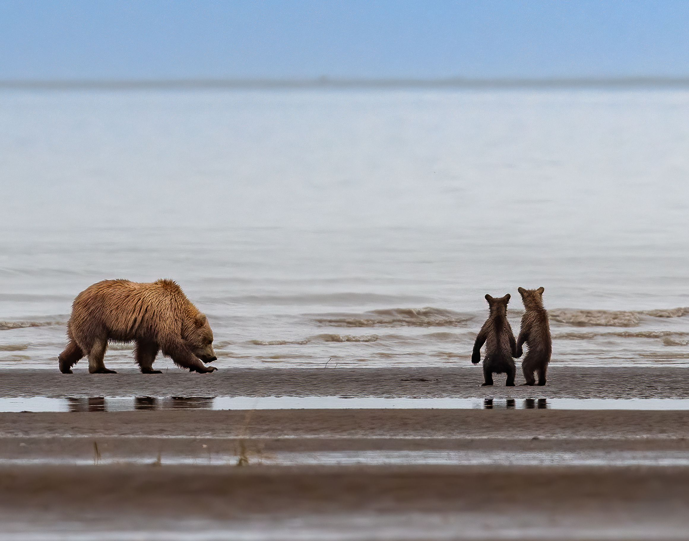 Trump administration reverses Obama-era hunting ban in Alaska