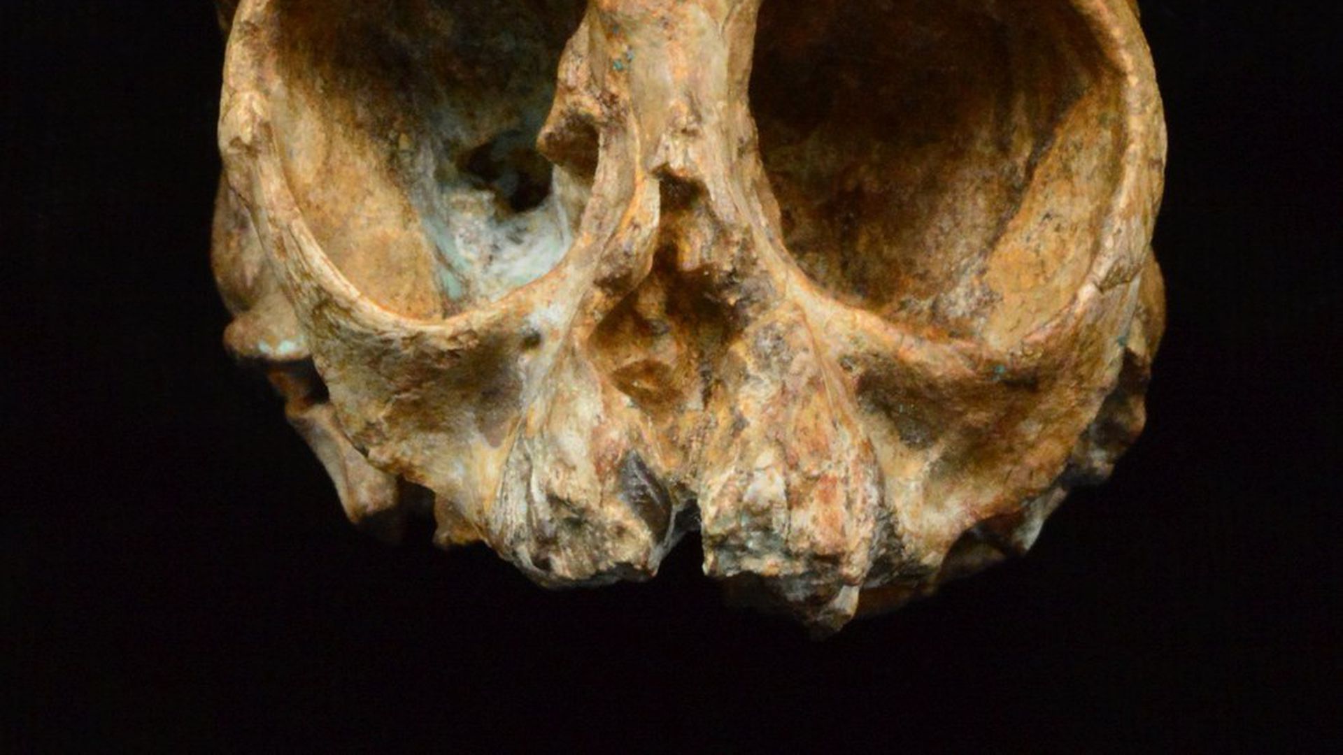Scientists find a new candidate for the ancestor of all apes — that includes us
