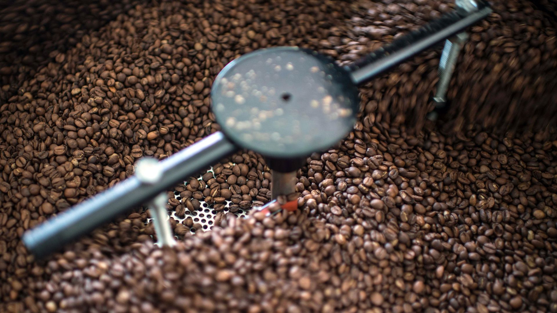 In this image, coffee beans are turned over in a larger container