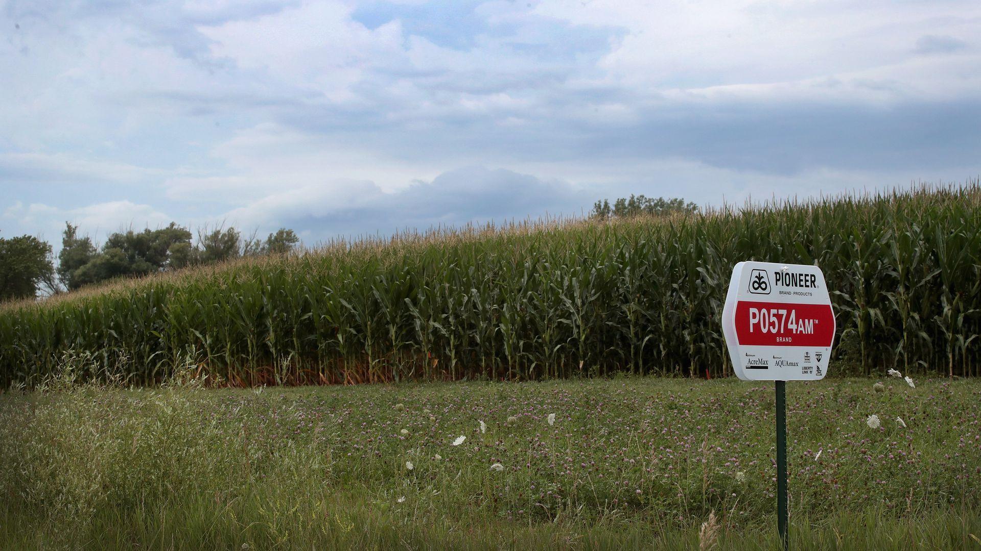 A corn farm in Iowa