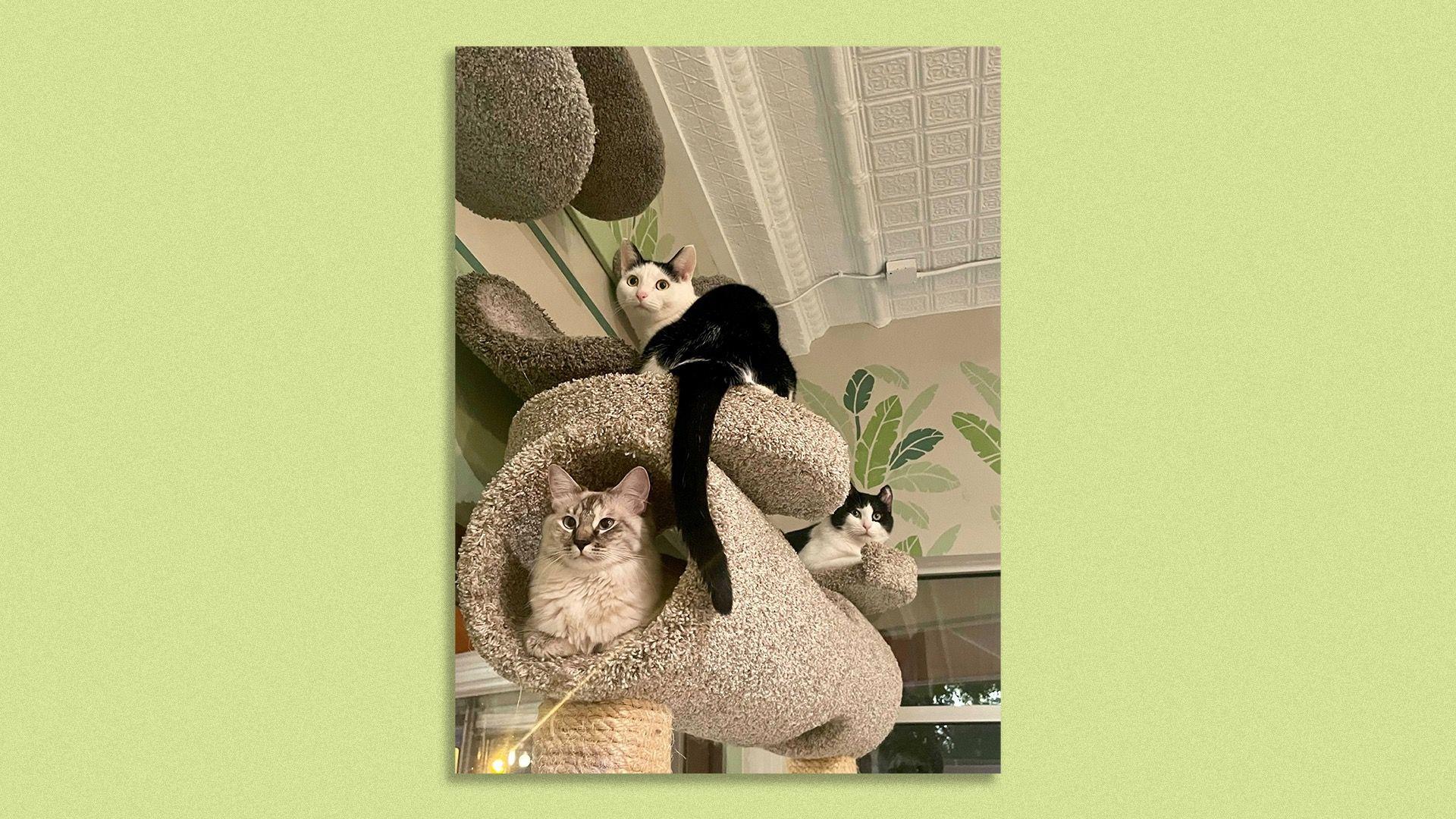 Three cats in a cat tree so cute