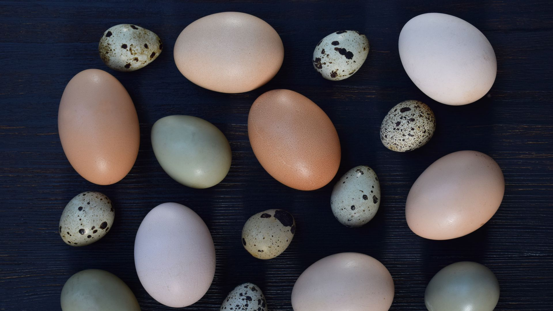 Several different bird eggs with varying colors and sizes placed on a dark background