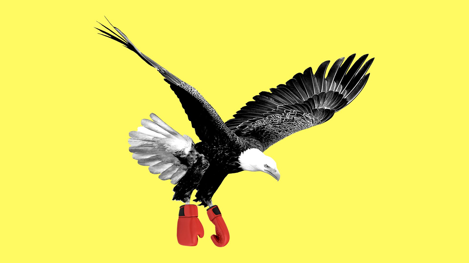 Illustration of bald eagle wearing boxing gloves