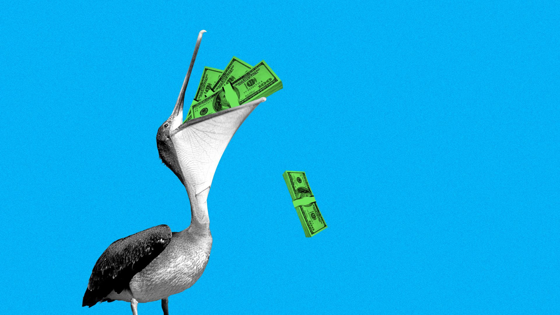 Illustration of a pelican with stacks of cash in his mouth.