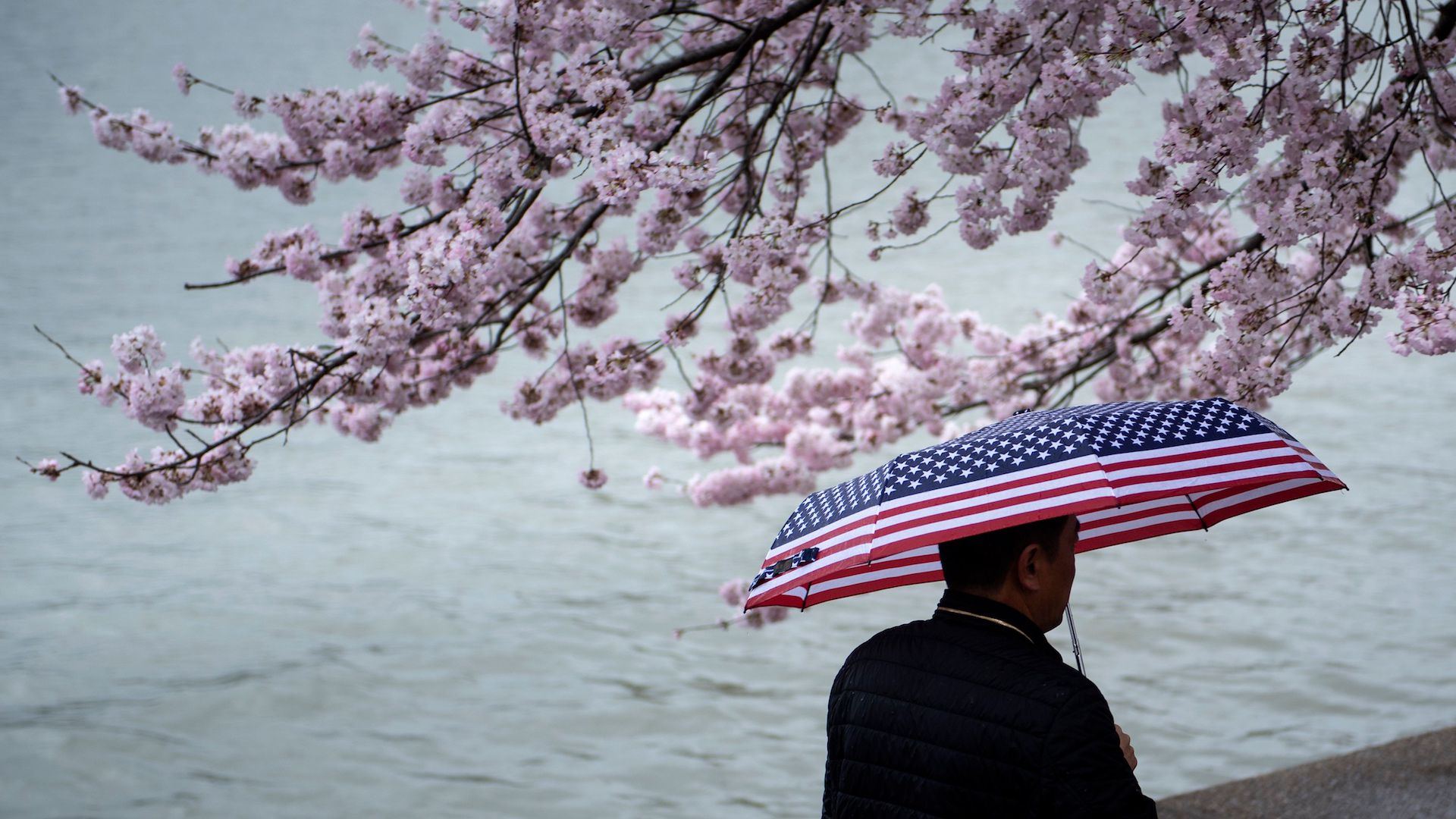 A man walking along the Tidal Basin in Washington with an umbrella