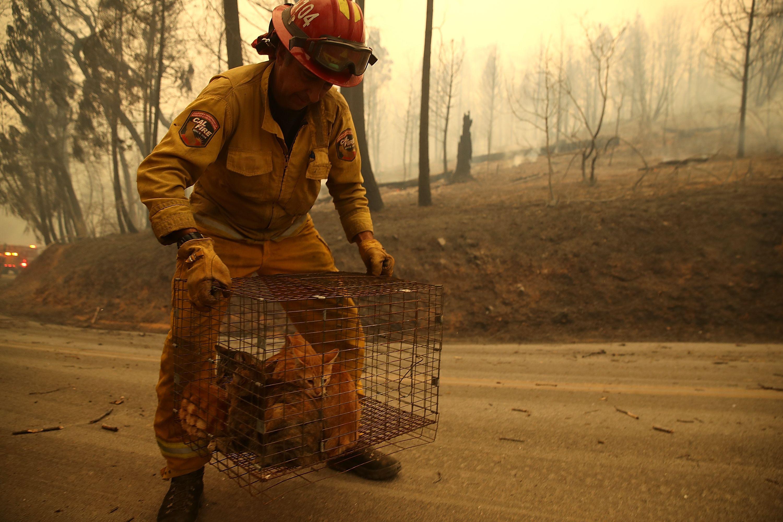 Fireman carry's animal cage.