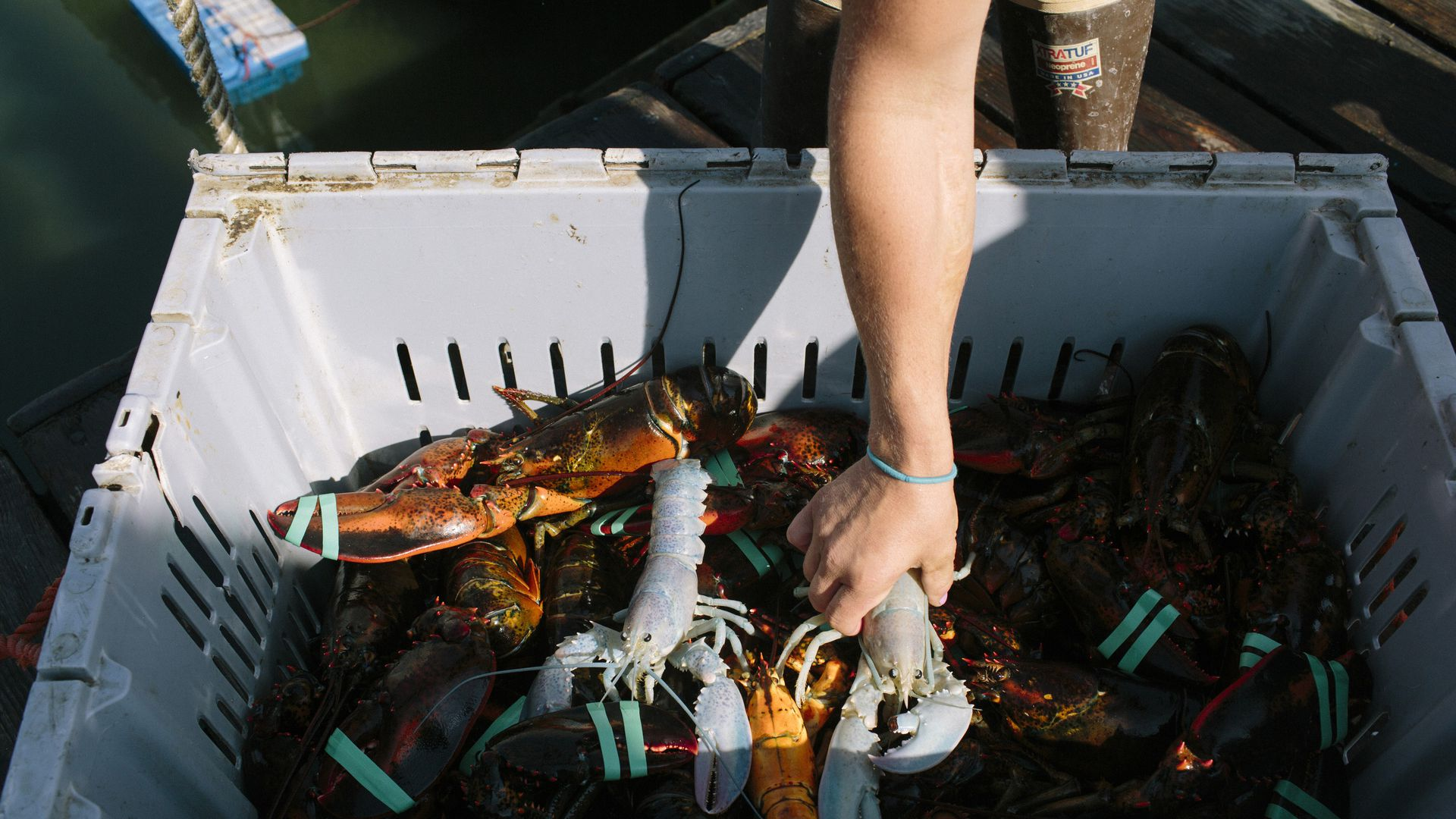 Trade war woes: Maine lobster exports to China down 84%