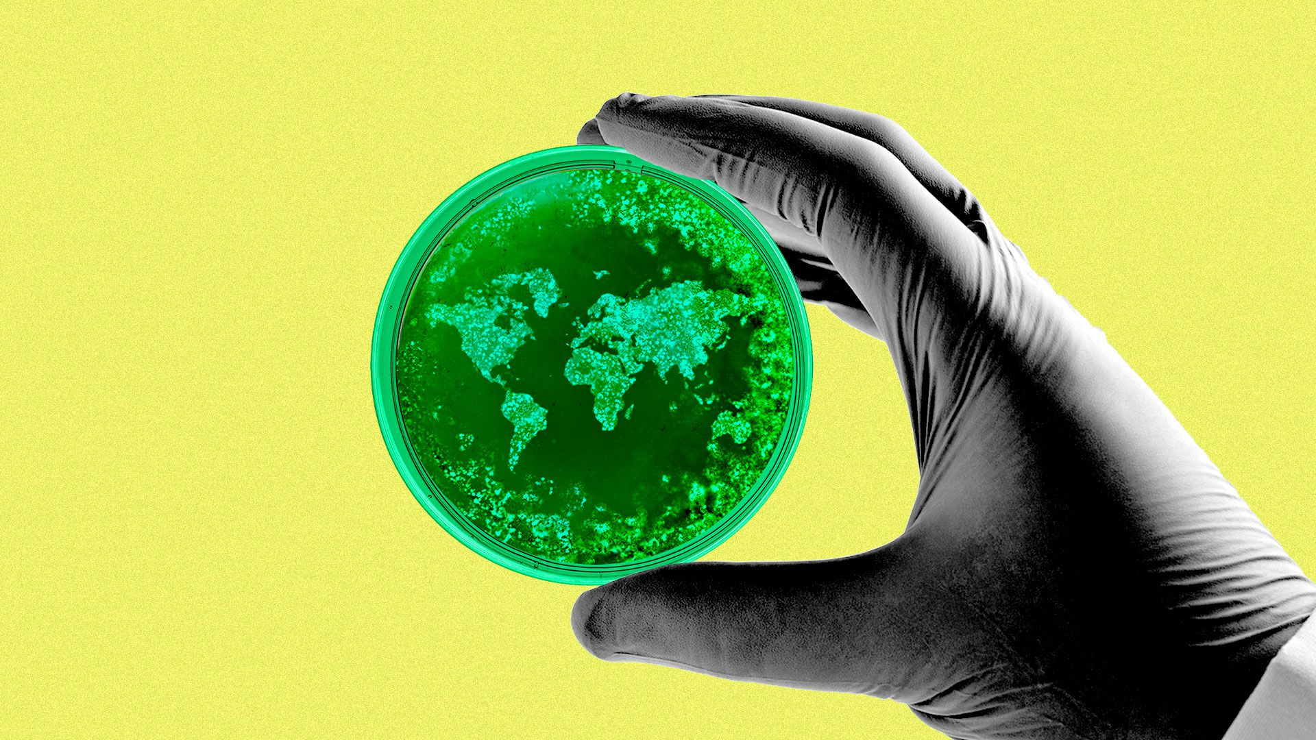 Illustration of a scientist's gloved hand holding a petri dish with the world made out of bacteria