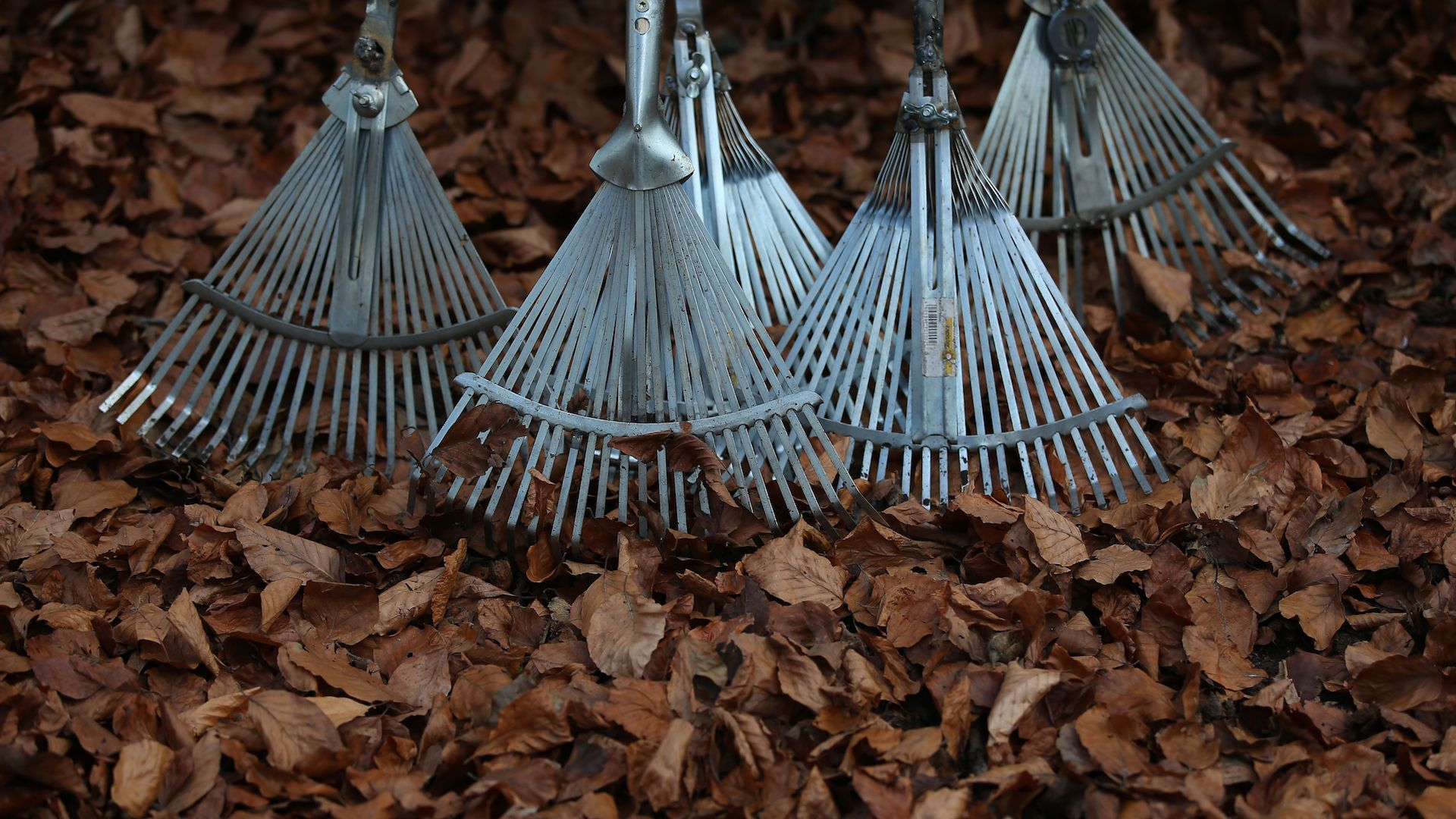 Rakes in the forest in Cologne, Germany.