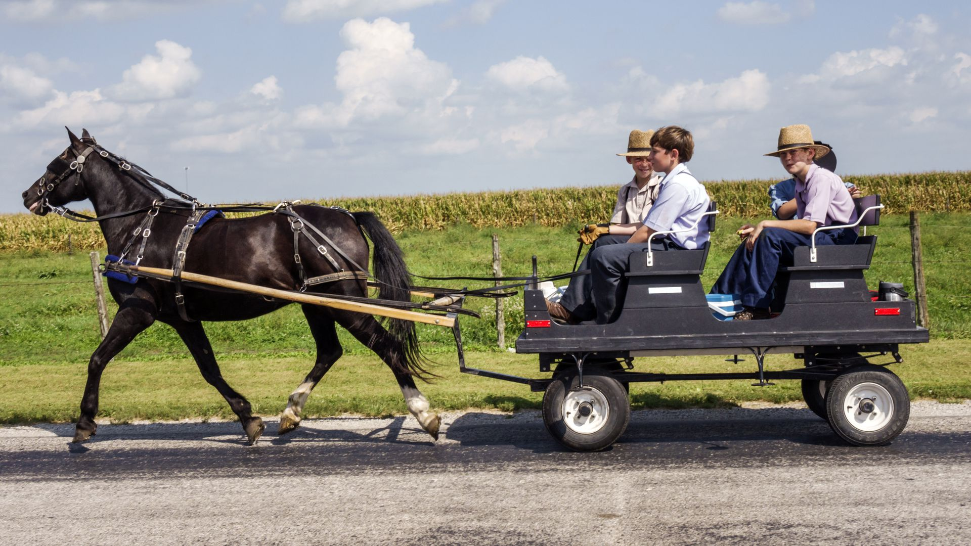 Amish boys being pulled in a horse and buggy.