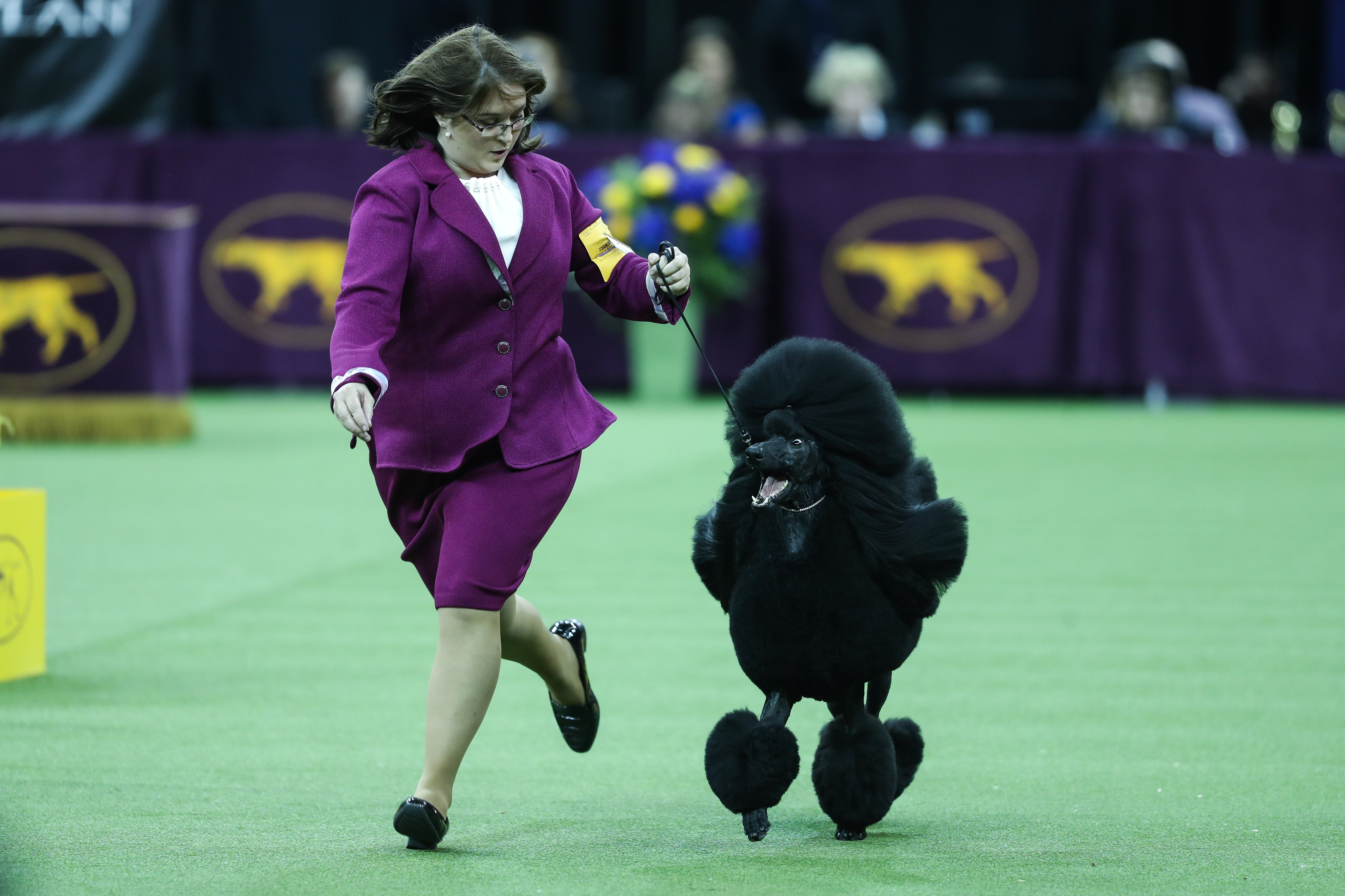A dog running behind its owner