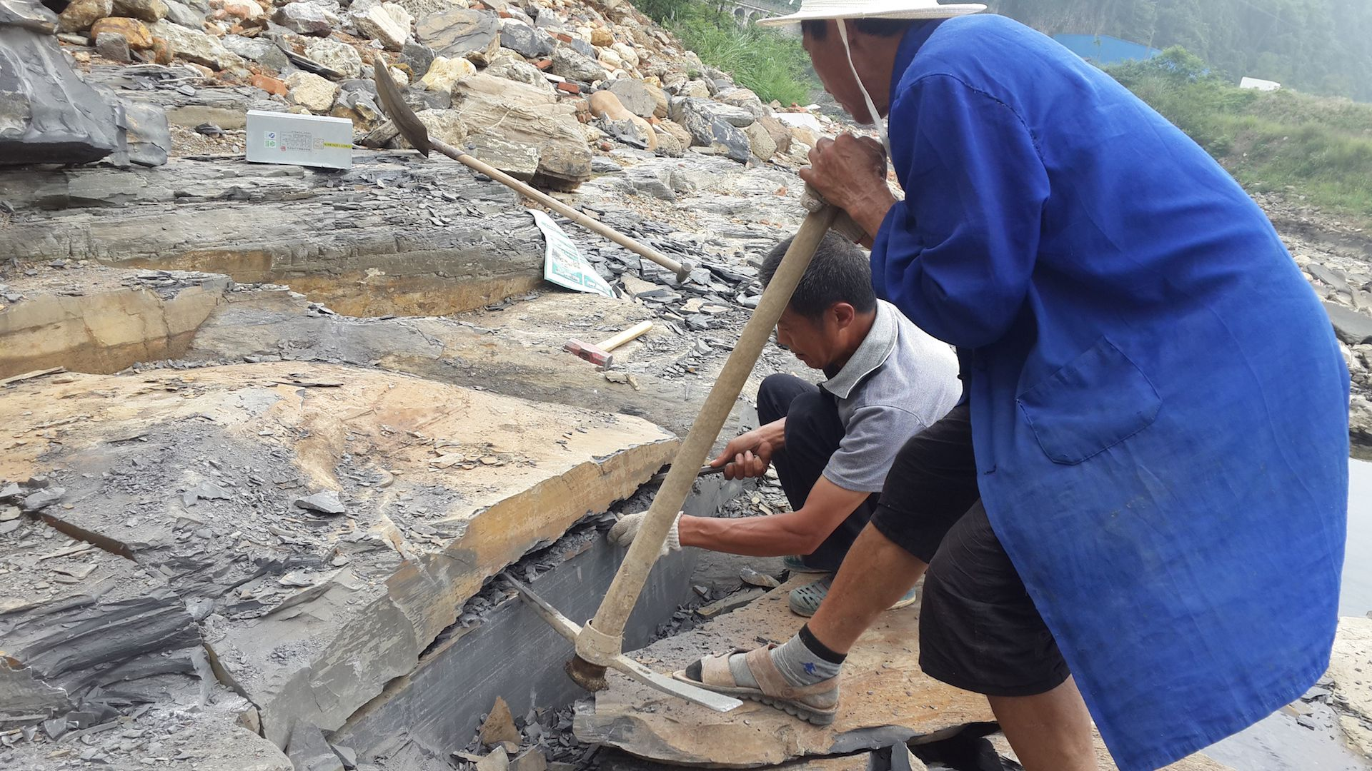 Scientists work to dig up fossils at the Qingjiang biota in China.