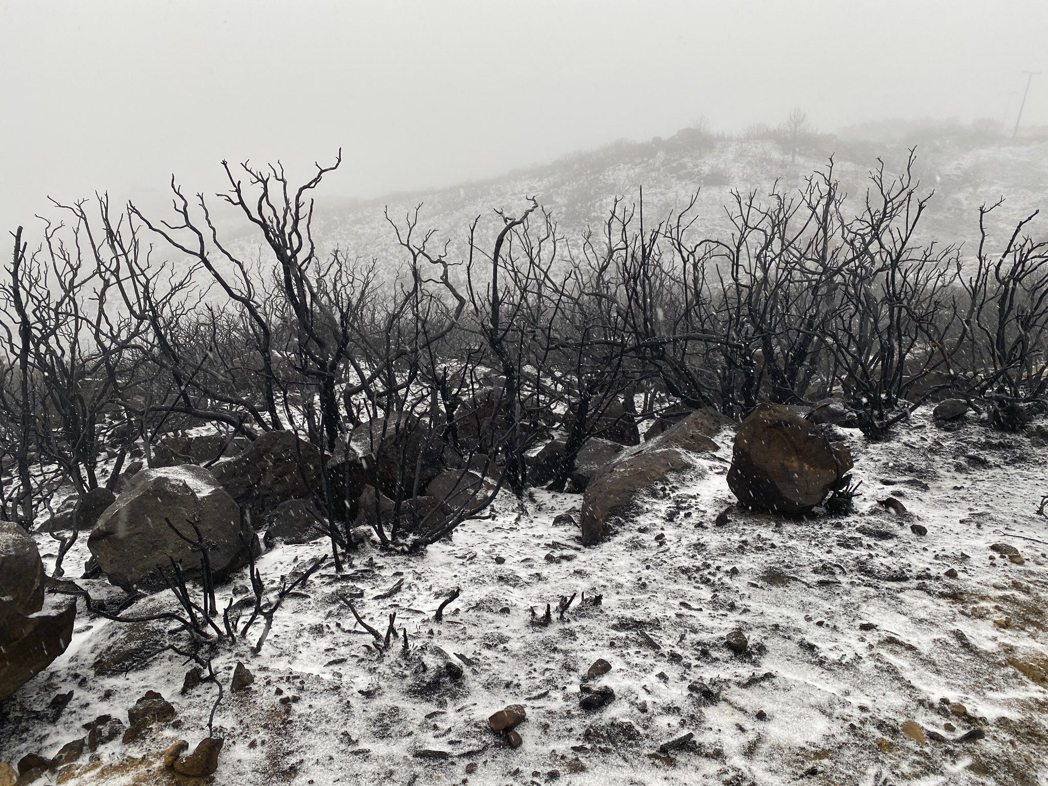 Snow in recently burned wilderness area.