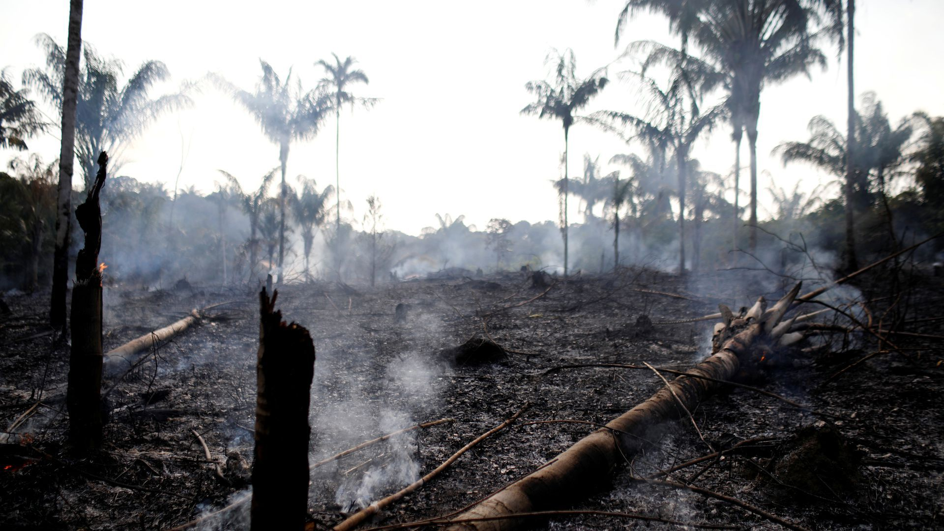 A charred trunk is seen on a tract of Amazon jungle that was recently burned by loggers and farmers in Brazil.