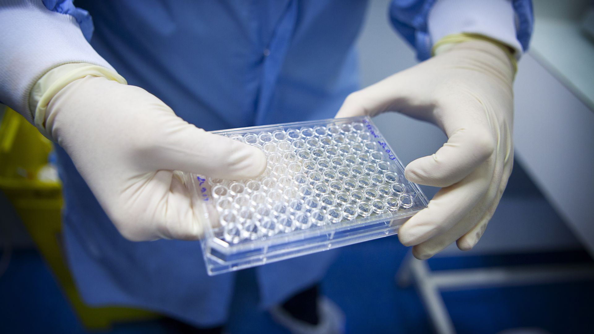 A researcher holds a plate used to grow T cells.