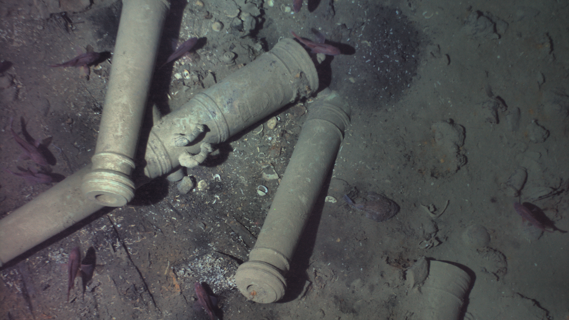 Image from an autonomous underwater vehicle, showing the wreckage of the San Jose's cannons.