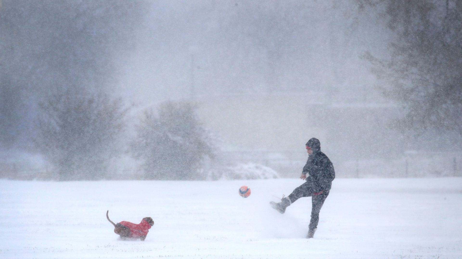 A resident plays with his dog as snow falls in Humboldt Park on November 11, 2019 in Chicago