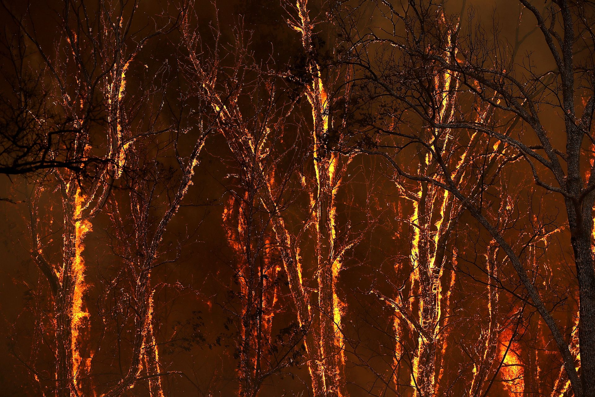 WHISKEYTOWN, CA - JULY 27: Flames from the Carr Fire burns through trees along highway 299 on July 27, 2018 near Whiskeytown, California.