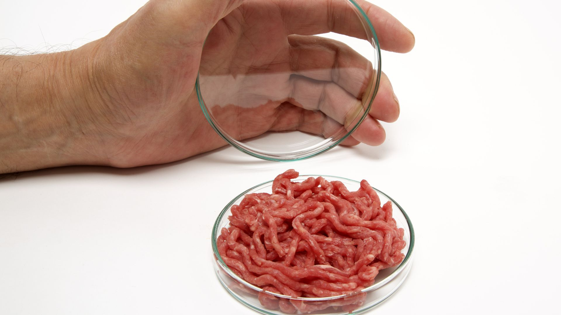 Ground beef in a petri dish