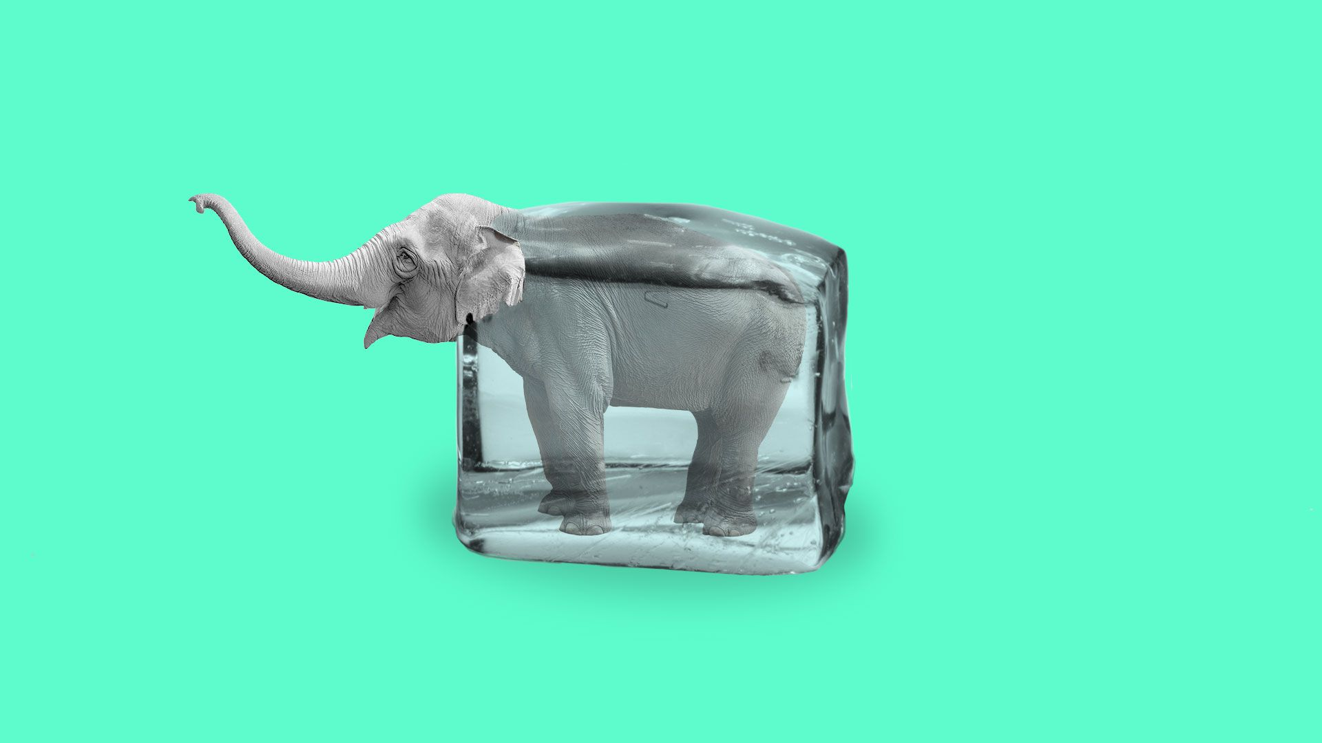 Illustration of an elephant thawing from an ice cube.