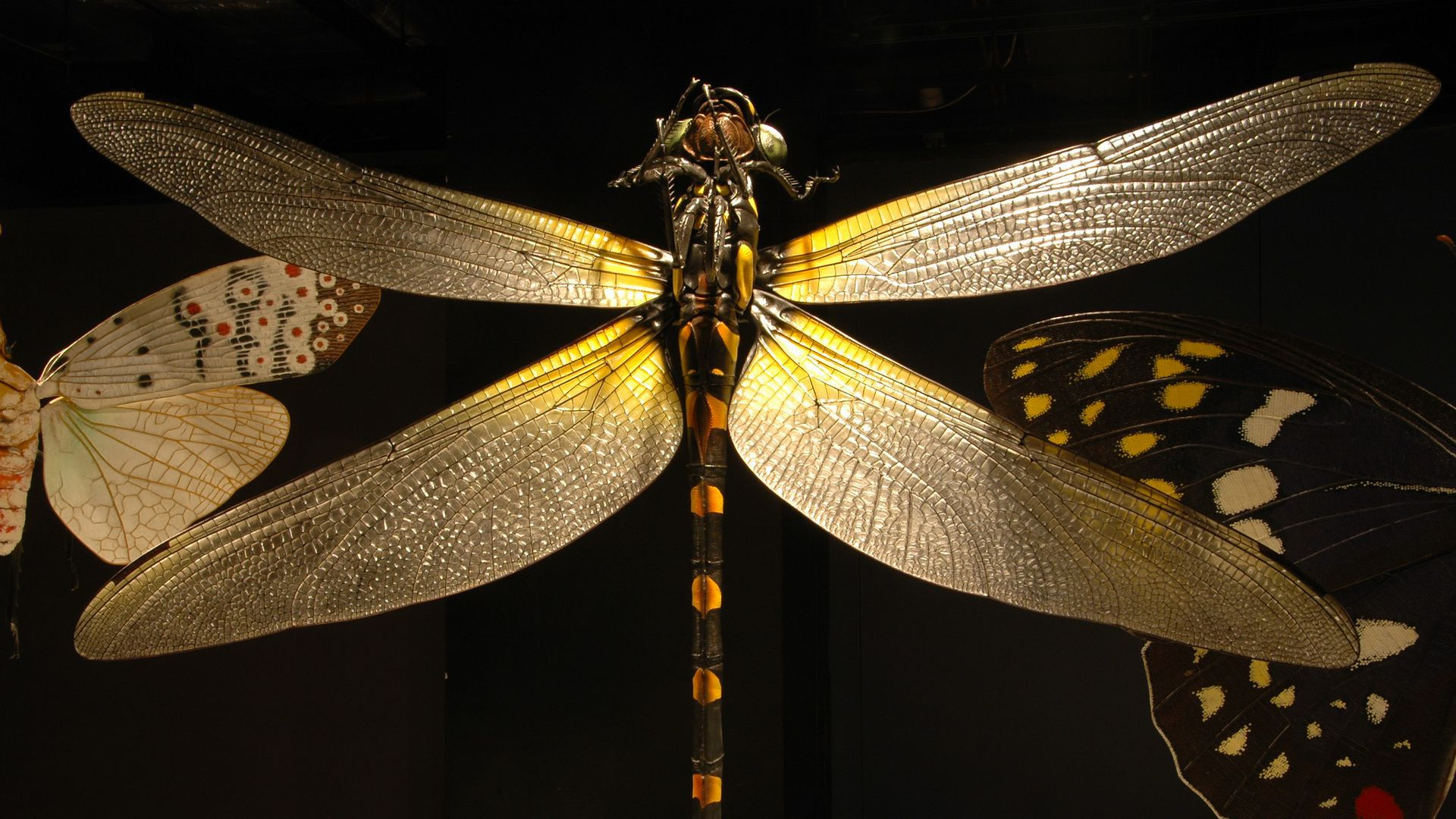 A sculpture of a dragonfly.