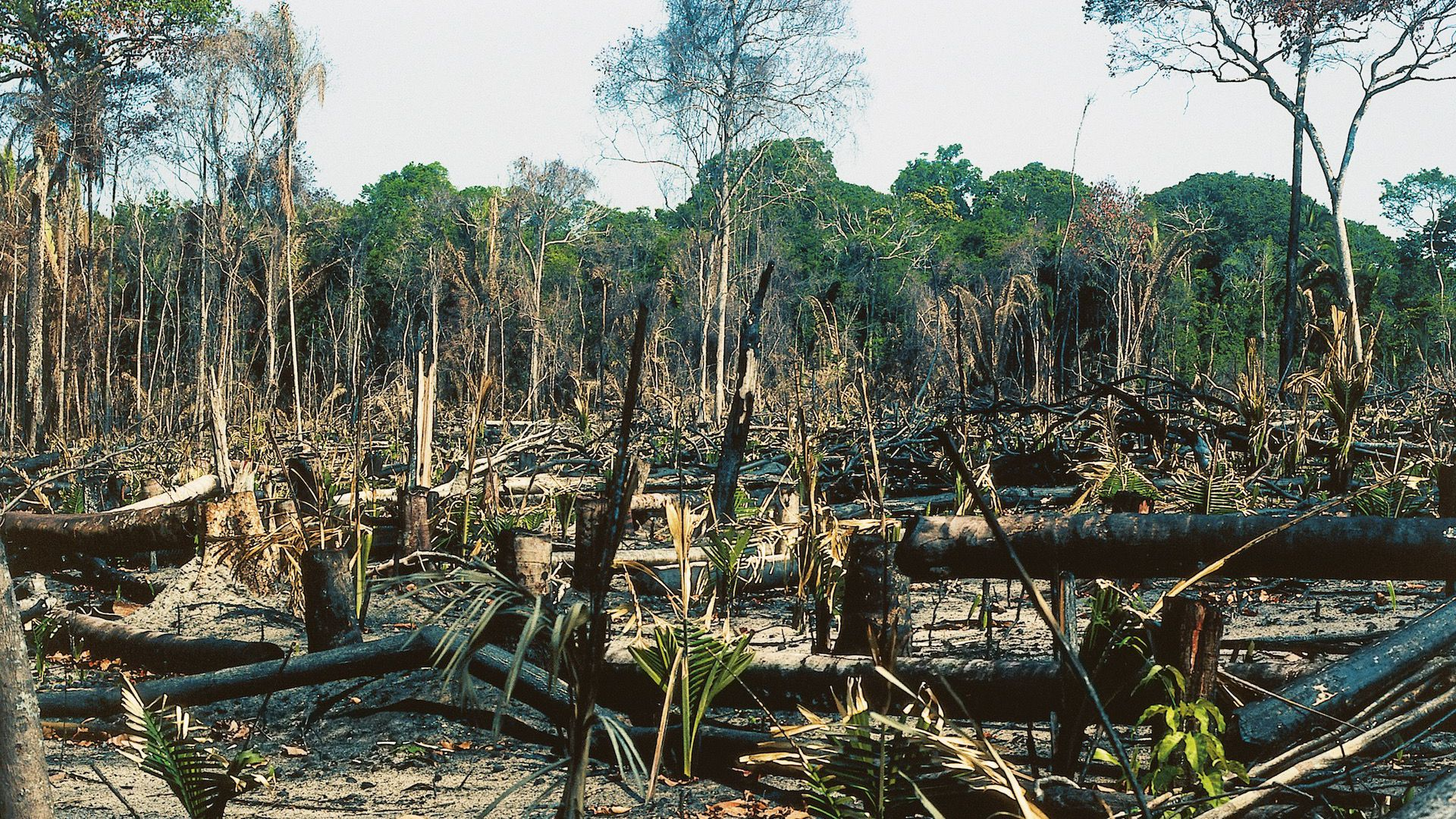 Amazon rainforest deforestation.