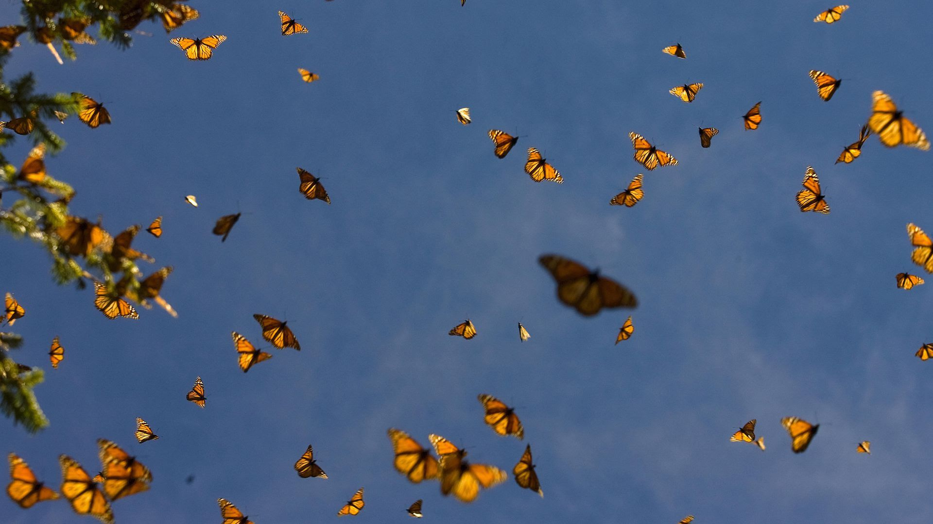 A group of butterflies in the air
