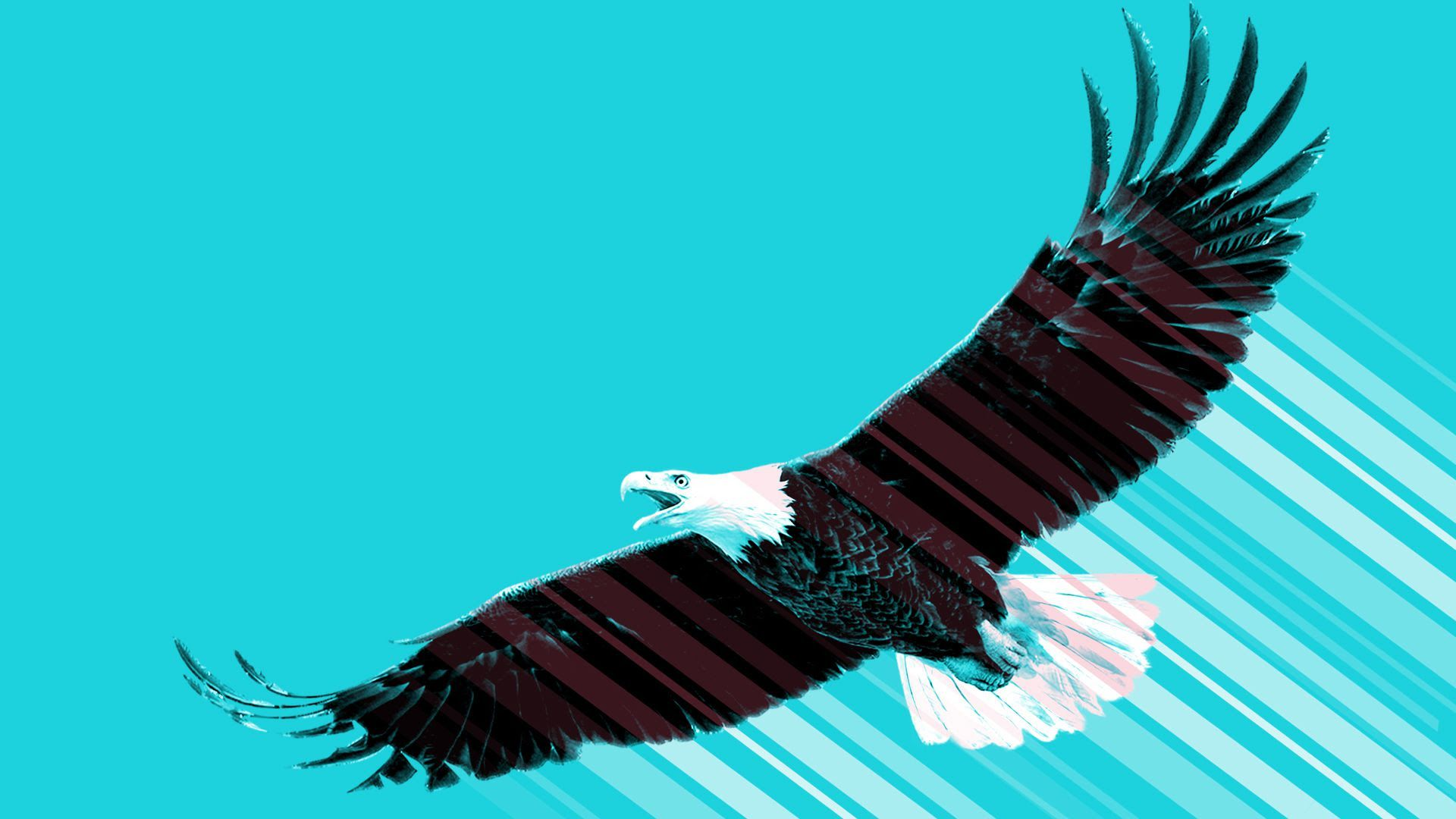 Illustration of eagle flying on blue background.