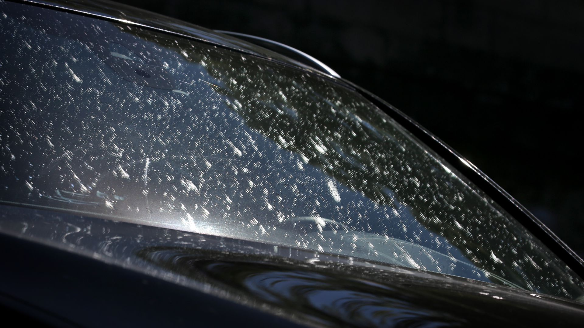 A car windshield covered in dead bugs