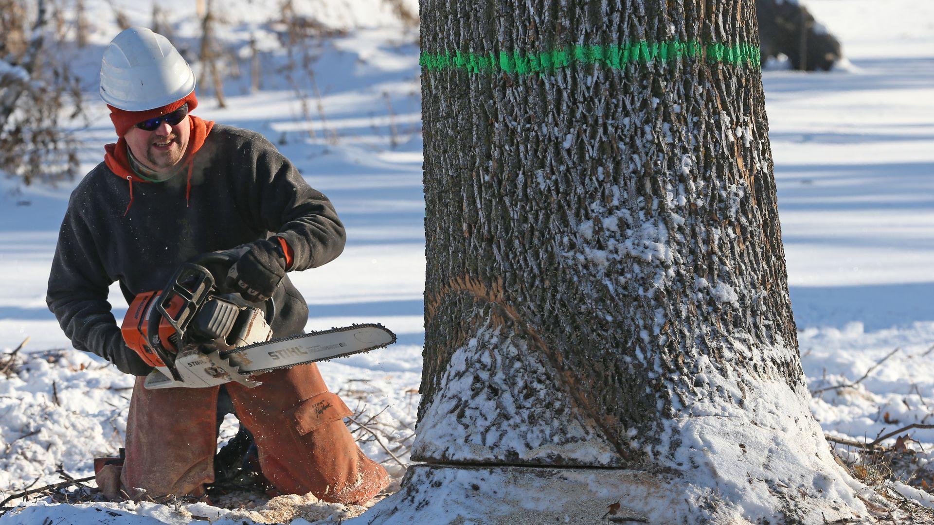 a man cuts down a tree
