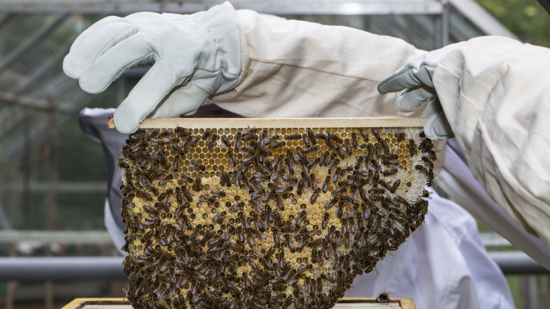 USDA suspends honeybee colony research as colony loss spikes
