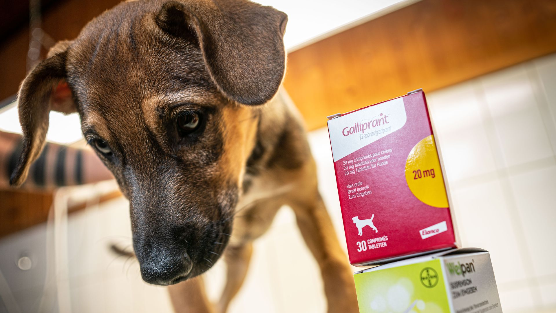 a dog standing next to animal medication produced by Elanco (top) and Bayer at a veterinary practice