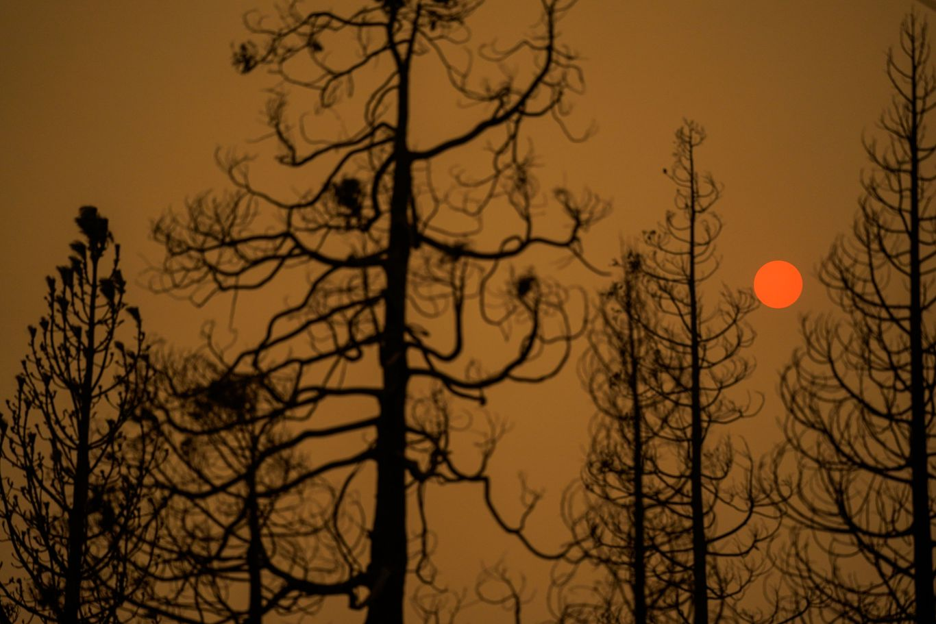 Severe wildfires in the West may already be altering the future of forests thumbnail