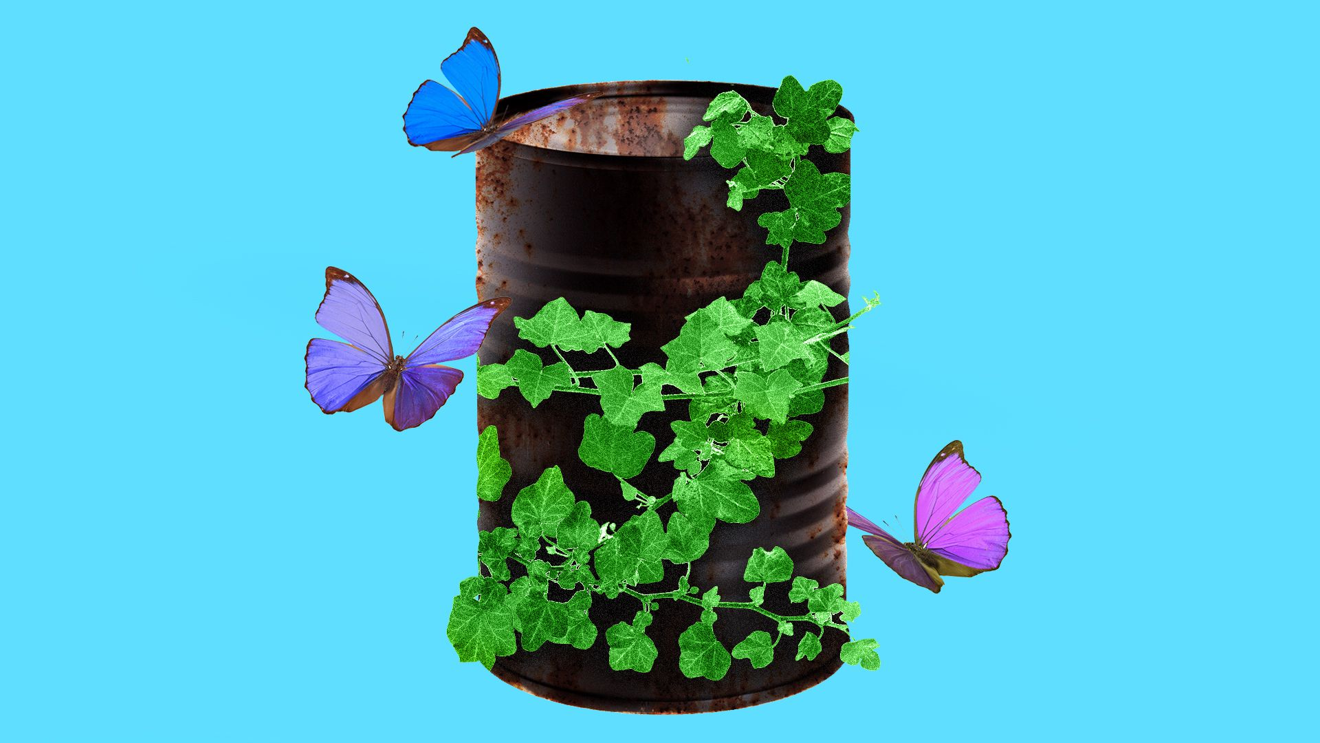 Oil barrel with plants and butterflies