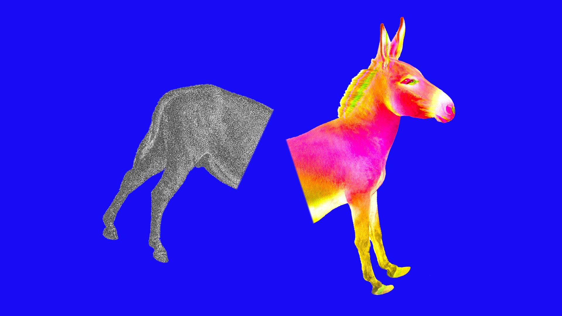 This illustration shows a donkey, symbolizing the Democratic party, split in half and shown in different colors.