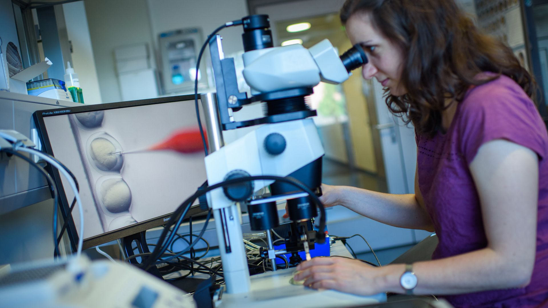 Photo of female researcher observing a CRISPR-Cas9 process through a stereomicroscope