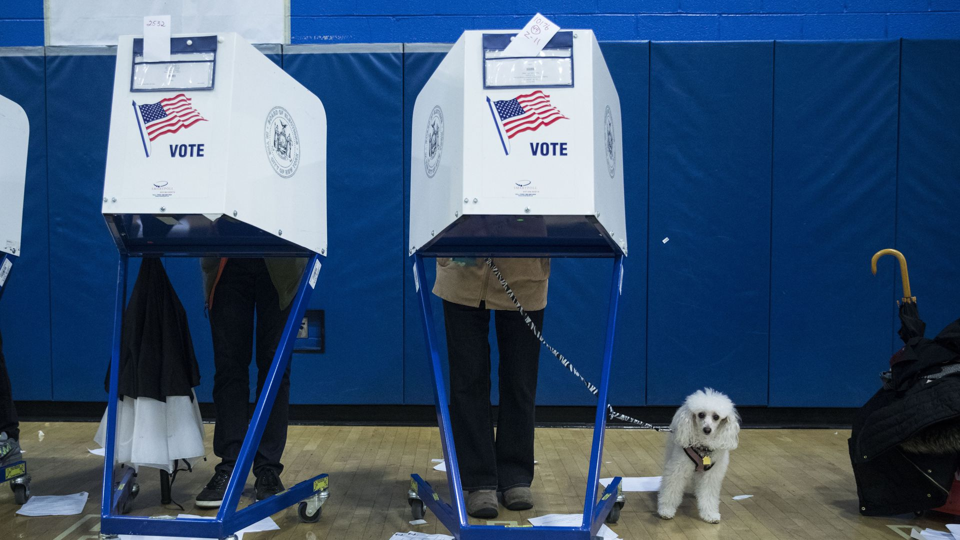Two voting booths with people voting in them. One voter has a small, white, fluffy dog on a leash.